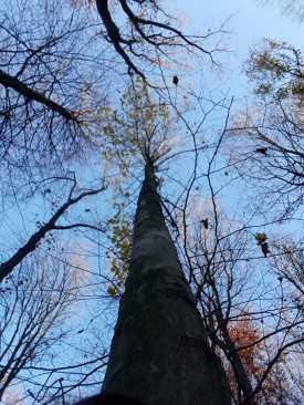 Bestattung Baumbestattung BestattungenVest